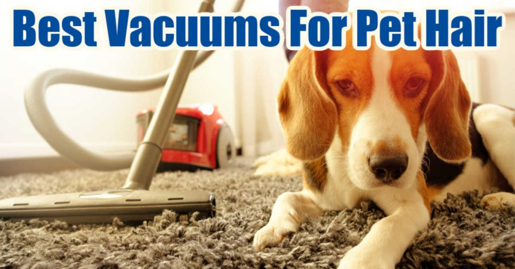 dog with a vacuum on carpet and text overlay reading the best vacuums for pet hair