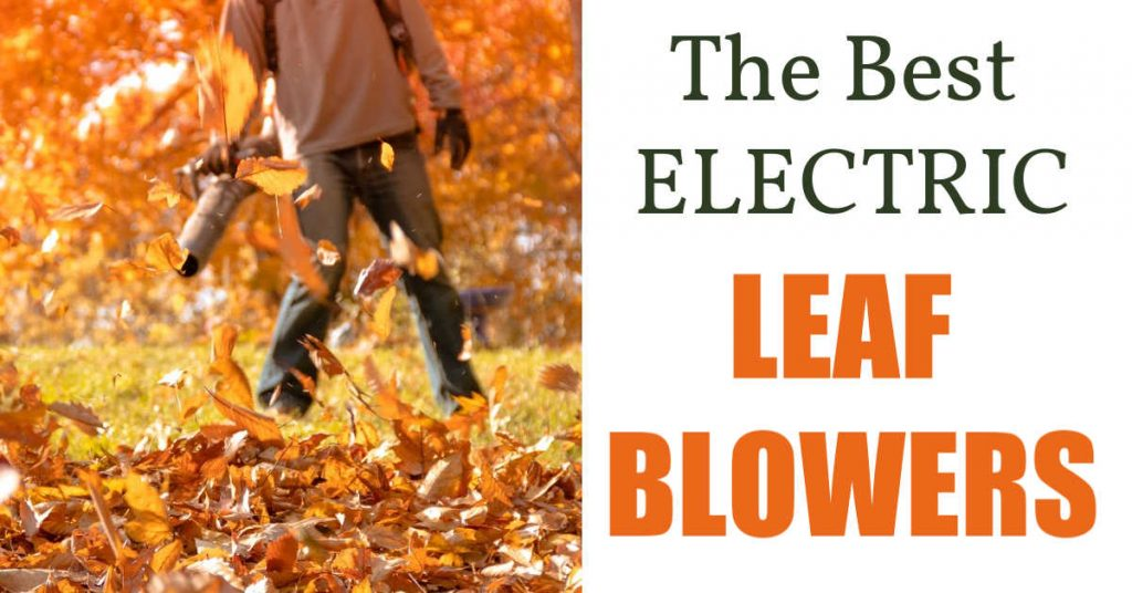guy holding leaf blower, fall leaves,